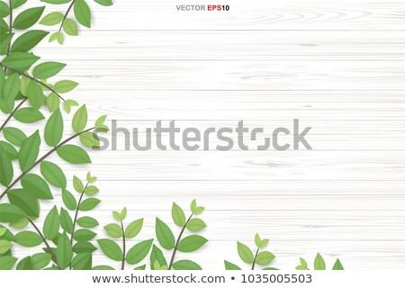 Soyut yeşil yaprak grunge kâğıt dizayn sanat Stok fotoğraf © rioillustrator