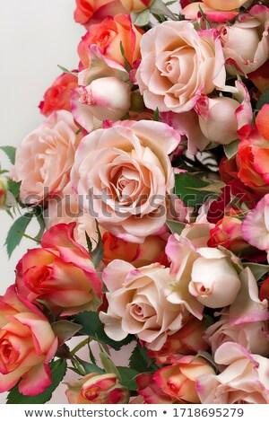 Stock fotó: Friss · rózsaszín · rózsák · keret · izolált · fehér