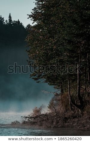 Forest lake in the autumn morning. Vertically. Stock photo © frank11
