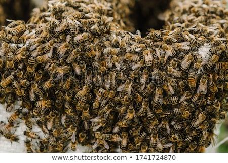 Mel de abelha pedra caverna comida natureza quadro Foto stock © Witthaya
