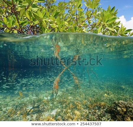 Folhas acima superfície da água árvore natureza folha Foto stock © Zhukow