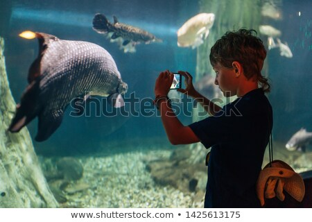 People watching huge aquarium in oceanarium. Stock photo © kyolshin