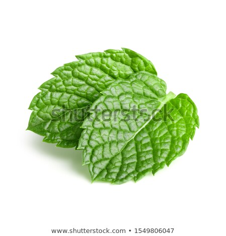 green plant with leaves studio shot stock photo © lunamarina