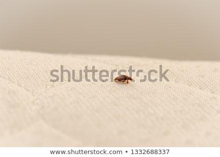 ágy rovar makró fotó Stock fotó © jareyonlds