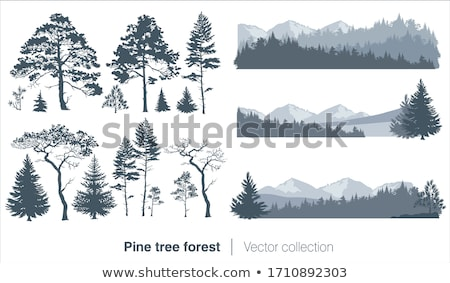 Group of pine tree cones Stock photo © olandsfokus