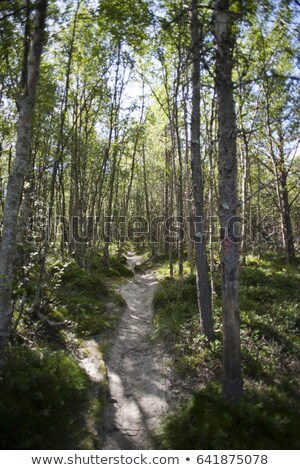 Footpath in the woods, Rondane National Park, Norway Stock photo © slunicko