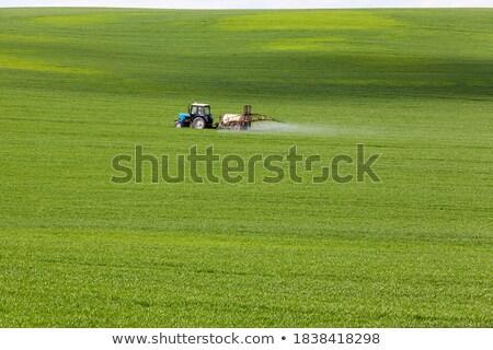 молодые · пшеницы · почвы · облачный · Blue · Sky - Сток-фото © avq