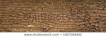 dąb · kory · powierzchnia · mech · naturalnych · tekstury - zdjęcia stock © meinzahn