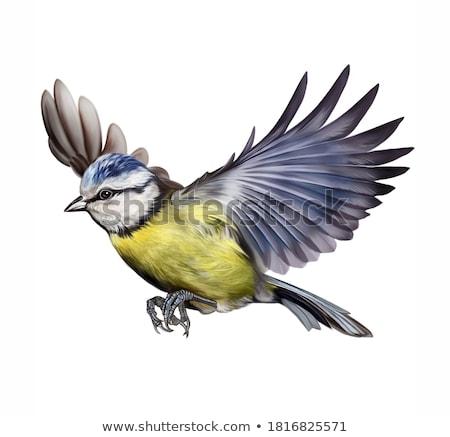teta · verde · água · pássaro · cor - foto stock © ivonnewierink