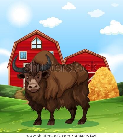 Buffalo standing in farmyard Stock photo © bluering
