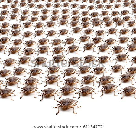 army of brown stink bugs stock photo © backyardproductions