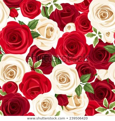Kırmızı gül çiçek tomurcuk yaprakları yalıtılmış Stok fotoğraf © orensila