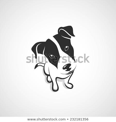 Black Dog Sitting Down Stock photo © monkey_business