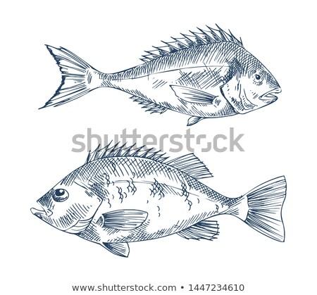 морской · продовольствие · рыбы · иллюстрация · градиент - Сток-фото © robuart