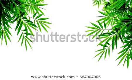 Bamboo frame with green leaves Stock photo © colematt