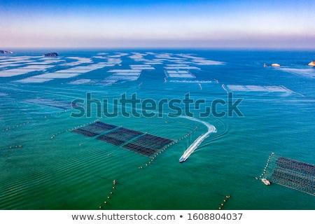 Barco alga fazenda barcos oceano pôr do sol Foto stock © raywoo