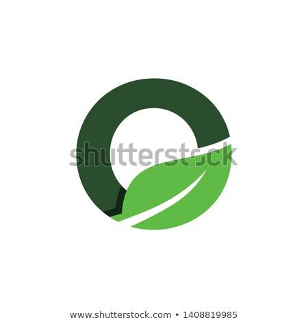 bio leaf letter o logotype vector symbol Stock photo © blaskorizov