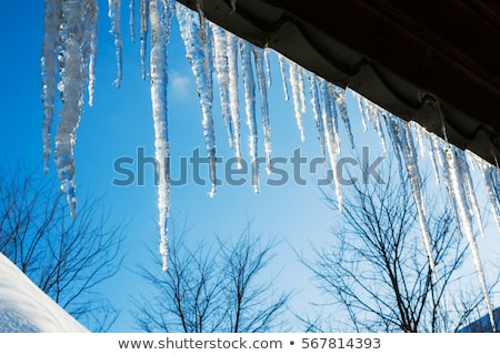 spring icicle melts in sunlight Stock photo © romvo