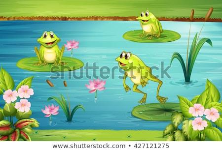Drie vijver illustratie natuur landschap achtergrond Stockfoto © colematt