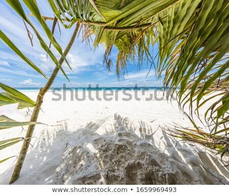 Hojas de palma idílico playa primer plano árbol arenoso Foto stock © AndreyPopov