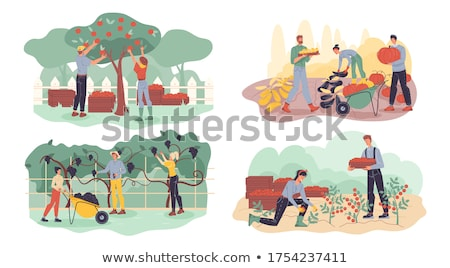 harvesting apples and grapes agriculture vector stock photo © robuart