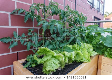 Urban Agriculture and Plants Growing in Big City Stock photo © robuart
