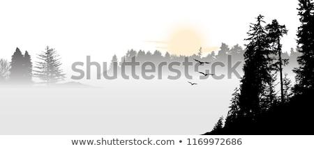 Solitaria albero sunrise colline India Foto d'archivio © dmitry_rukhlenko