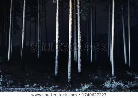 walkway in the pine woods Stock photo © Ansonstock