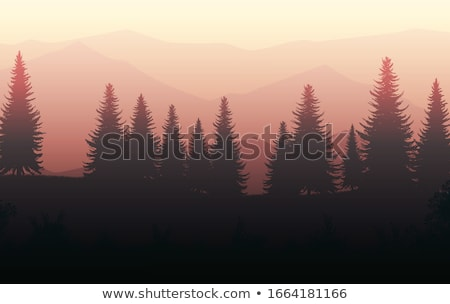 Pine Trees with Sun stock photo © skylight
