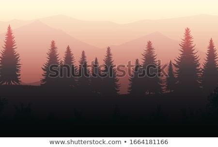 pinho · árvores · sol · azul - foto stock © skylight