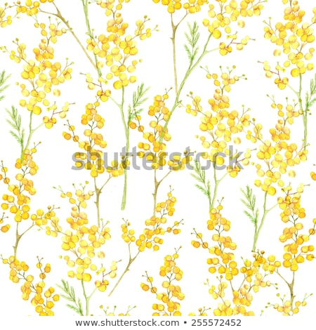 Photo stock: Belle · fleurs · jaunes · noir · nature · feuille · fond