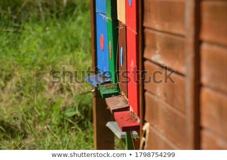 蜂の巣 スロバキア 蜂 動物 昆虫 屋外 ストックフォト © phbcz