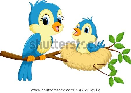Aranyos rajz madár család kreatív művészet Stock fotó © indiwarm
