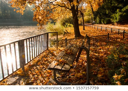 Lonely bench on autumn path Stock photo © zzve