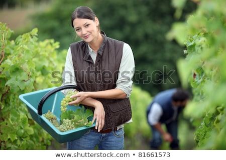 Couple pruning grape vines Stock photo © photography33