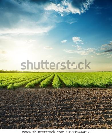 megművelt · föld · vidéki · táj · naplemente · égbolt · ház - stock fotó © aetb