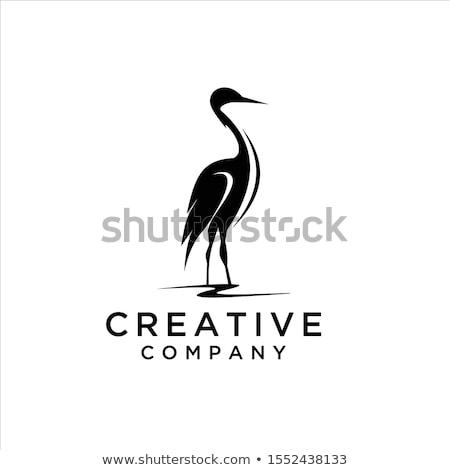 Heron and egret Stock photo © Elenarts