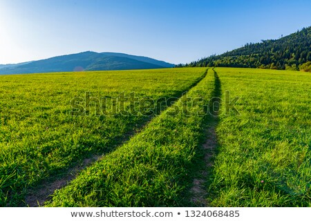 Vidék sáv zöld testtartás fa tájkép Stock fotó © guffoto