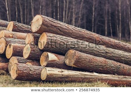 Pine Logs Background Stock photo © tainasohlman