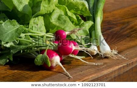 groot · bos · vers · ruw · radijs · groene - stockfoto © bdspn