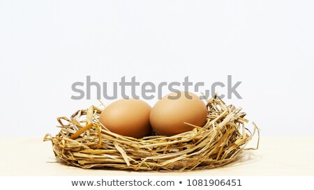 Bird's nest with two eggs Stock photo © bbbar