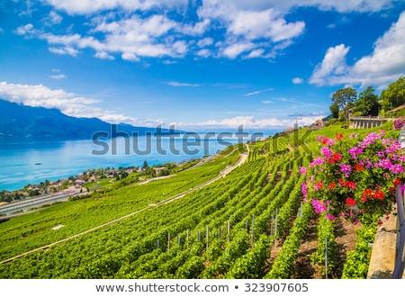 весна · озеро · Швейцария · желтые · цветы - Сток-фото © elenarts