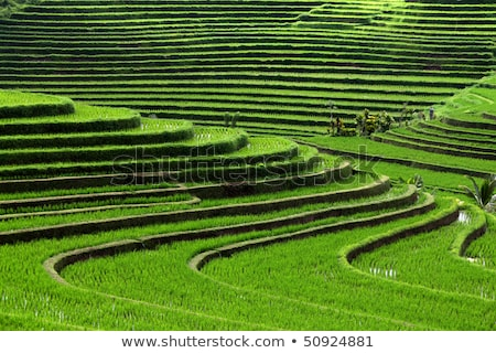 Бали · Индонезия · воды · продовольствие · солнце - Сток-фото © dinozzaver
