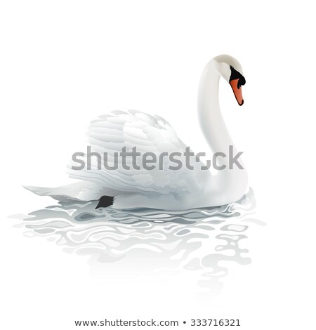 Swans on the water surface  stock photo © alinbrotea