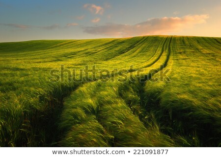 beautiful countryside fields landscape at sunrise time stock photo © taiga