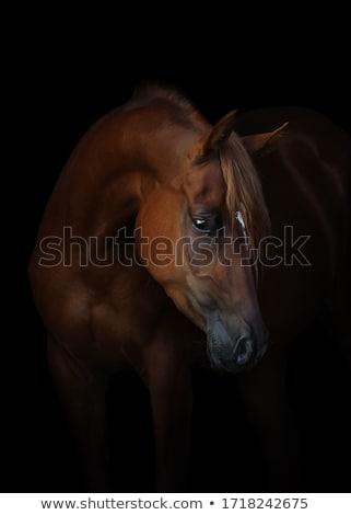 лошади голову коричневый небе свободу Сток-фото © compuinfoto