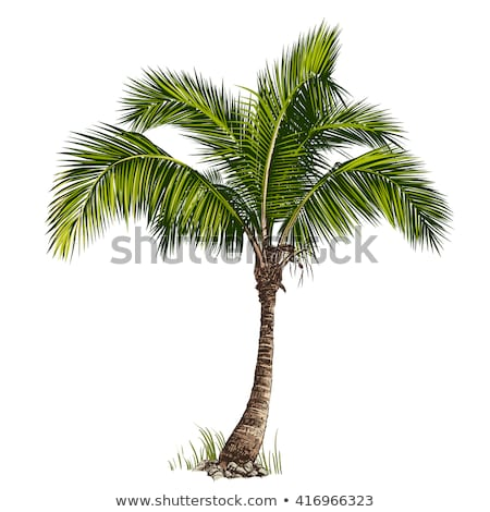 tropical coconut tree stock photo © kacpura