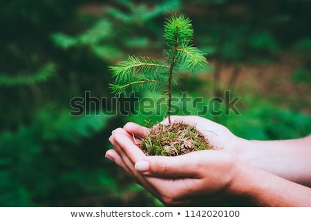 Ağaç fide eller küçük Stok fotoğraf © Quasarphoto