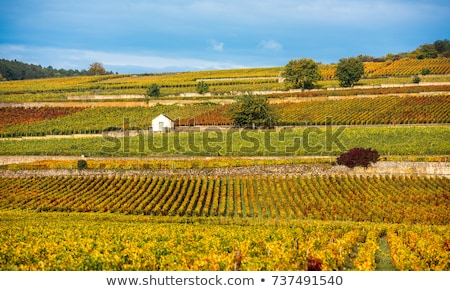 autumnal vineyards, Burgundy, France Stock photo © phbcz