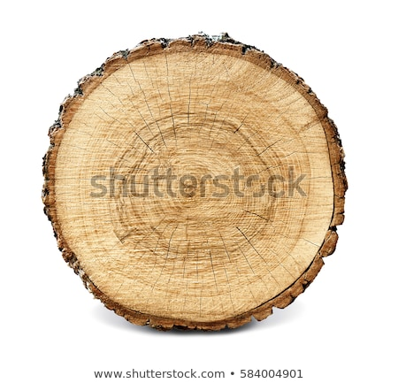 Old wooden tree stump cross section surface texture Stock photo © stevanovicigor